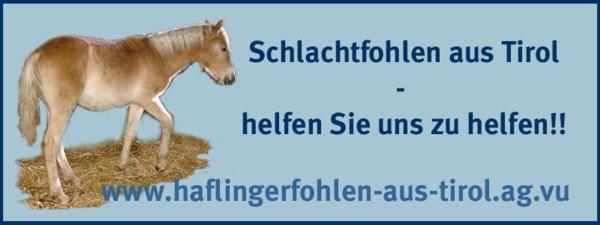 Haflinger Retten